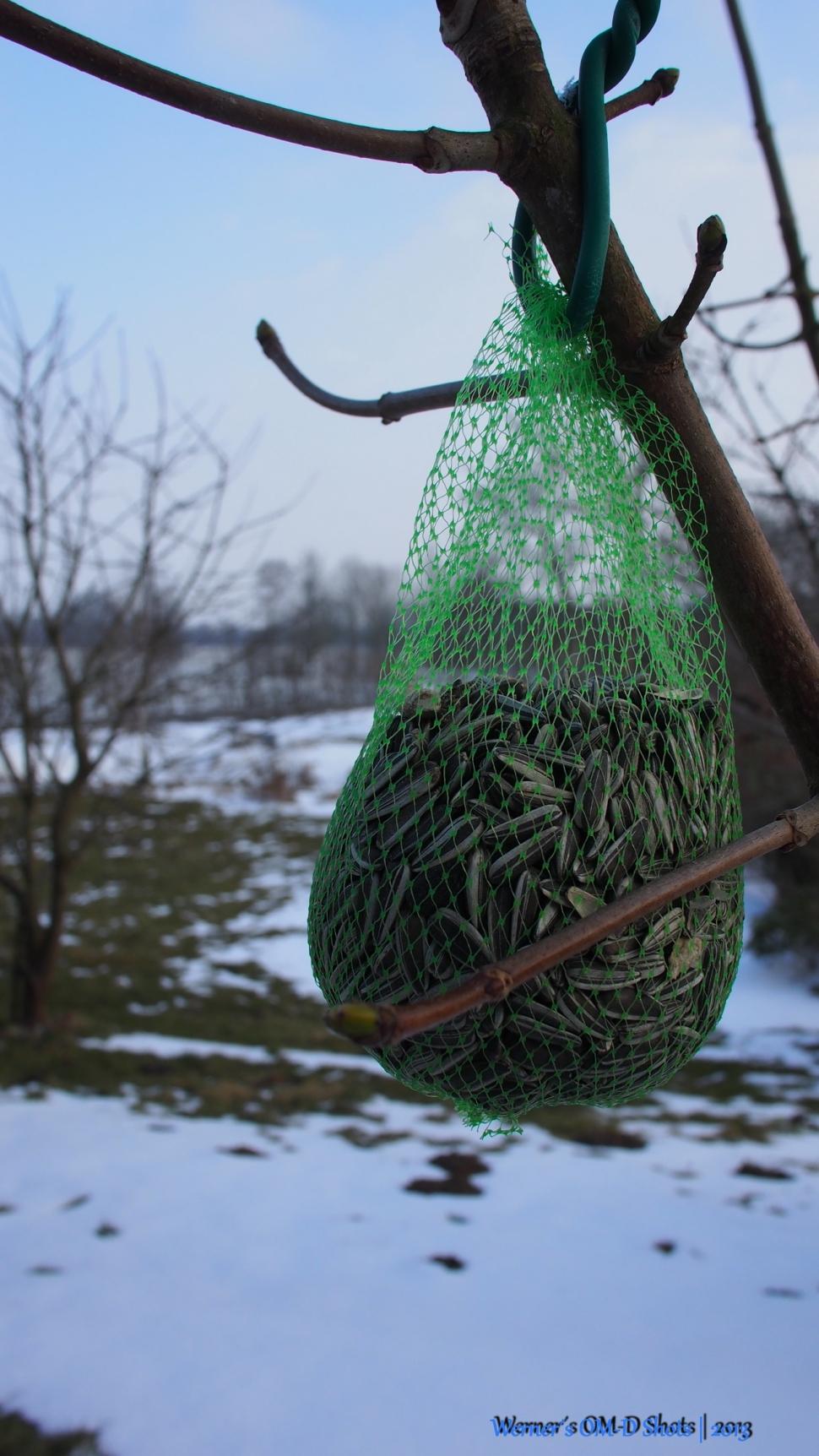 last bird feeding