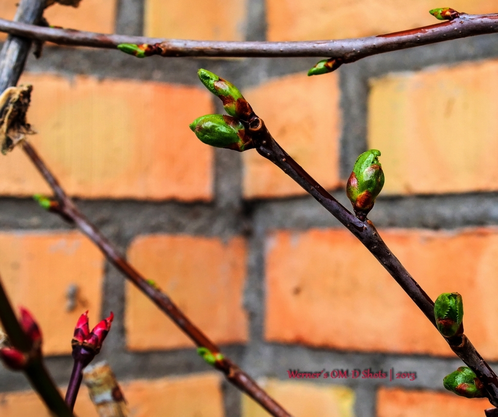lovely colored buds