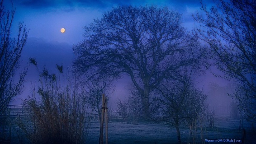 a blue foggy daybreak