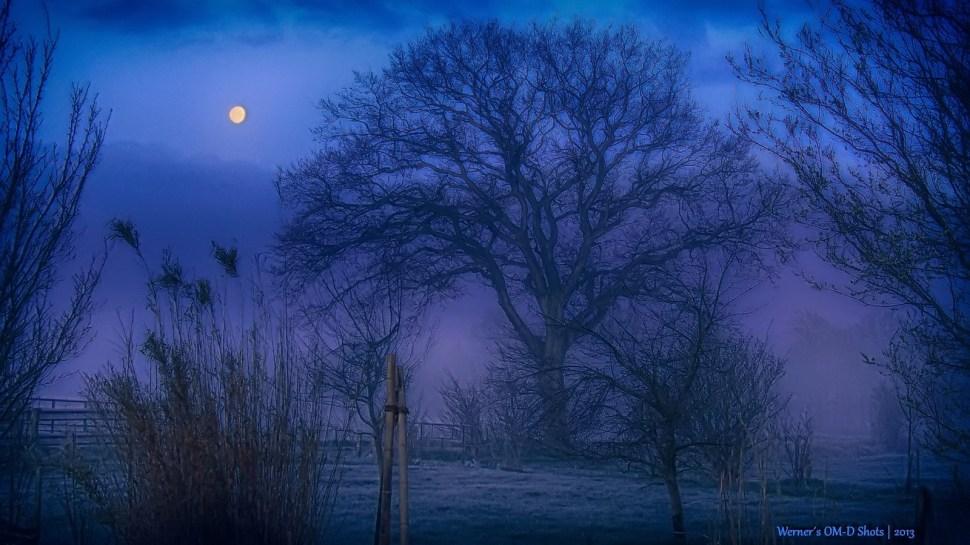 a blue foggy daybreak