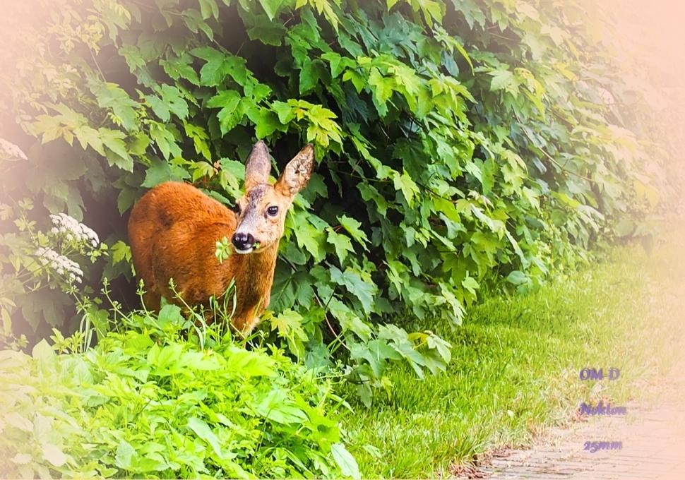 Bambi's sunday trip
