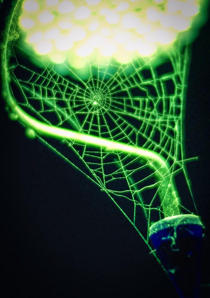 P2020003crop-spiderweb-960x