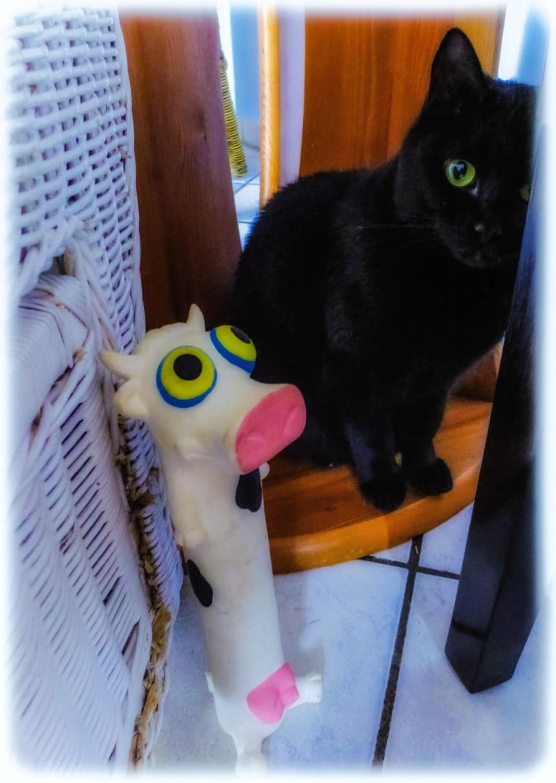 IMG_0278-blackcats-cow-Lr4-1920x