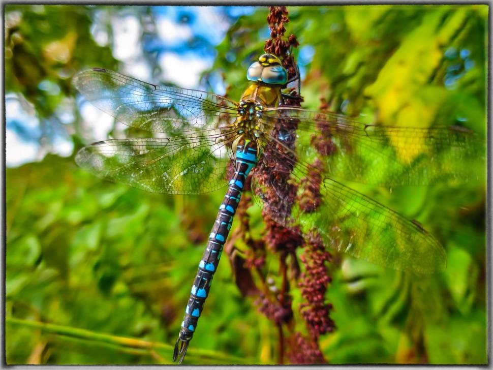 IMG_0026-Libelle-Lr4 (Large)