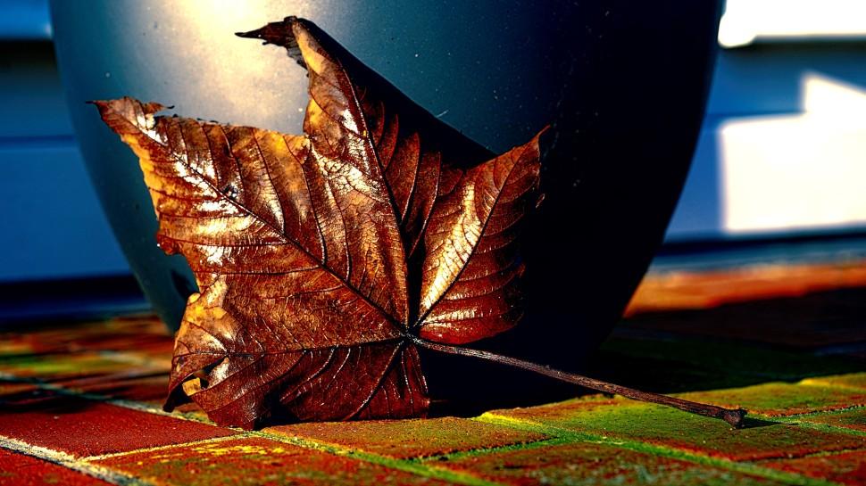 DSC00093_autumn_tpz (Andere)